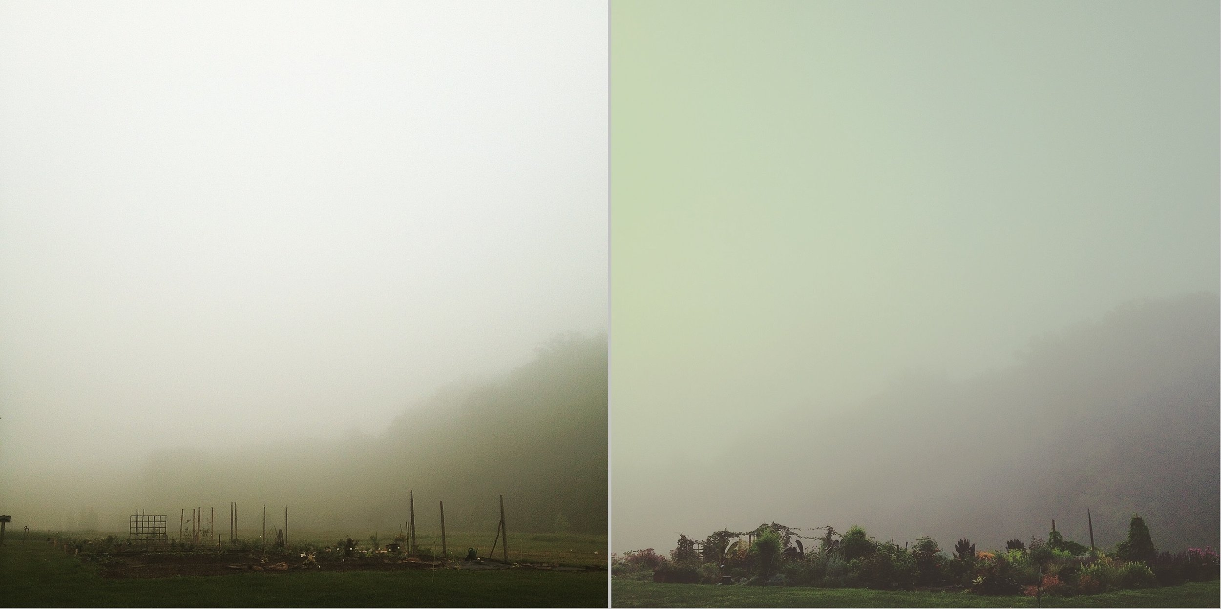 The area where Martha and her classmates created their individualistic gardens is a broad expanse free of structures and trees that can appear initially uninspiring, but becomes dramatically appealing through light and fog at different times. Already in early May are the plots eerily tonal from a foggy spring morning.