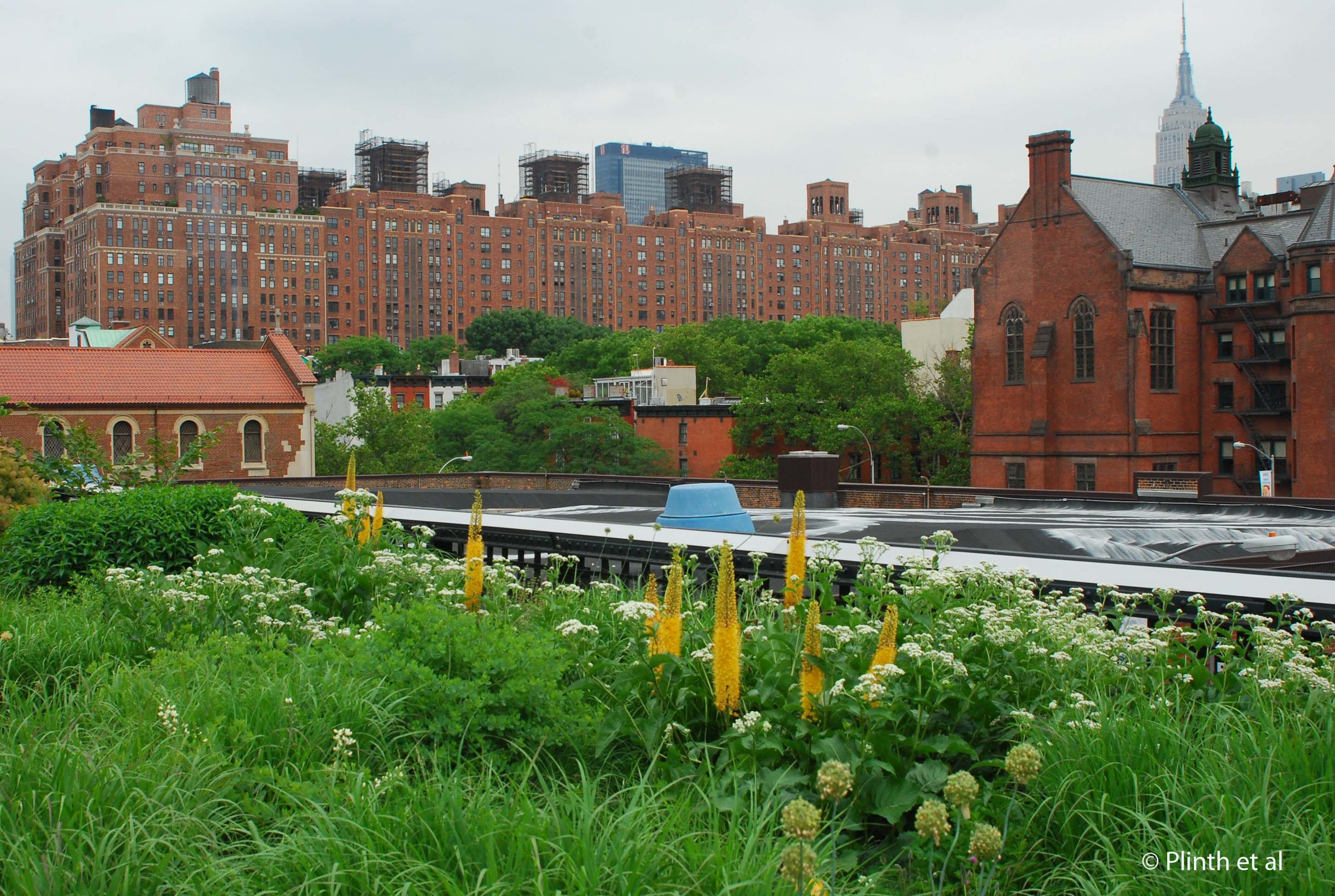 The High Line in mid-June