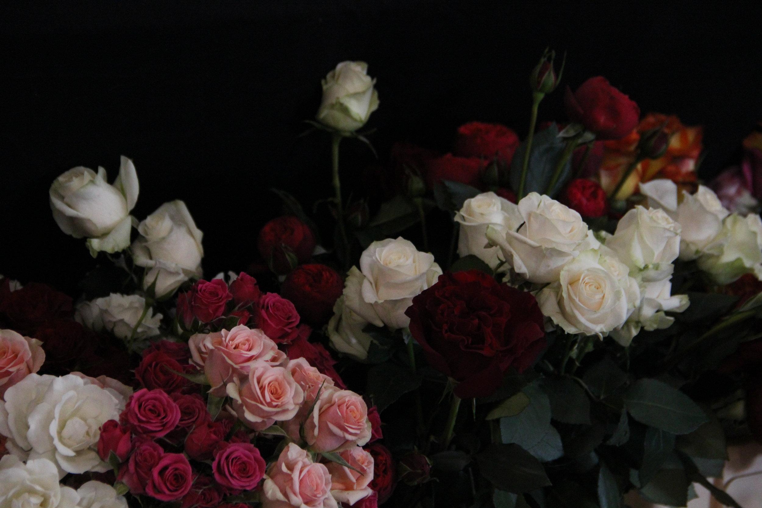 Cut flower Rose cultivars