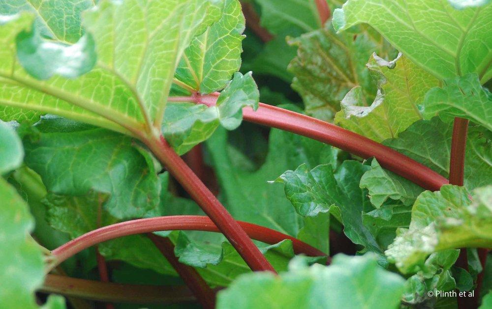 spring-rhubarb-lq.jpg