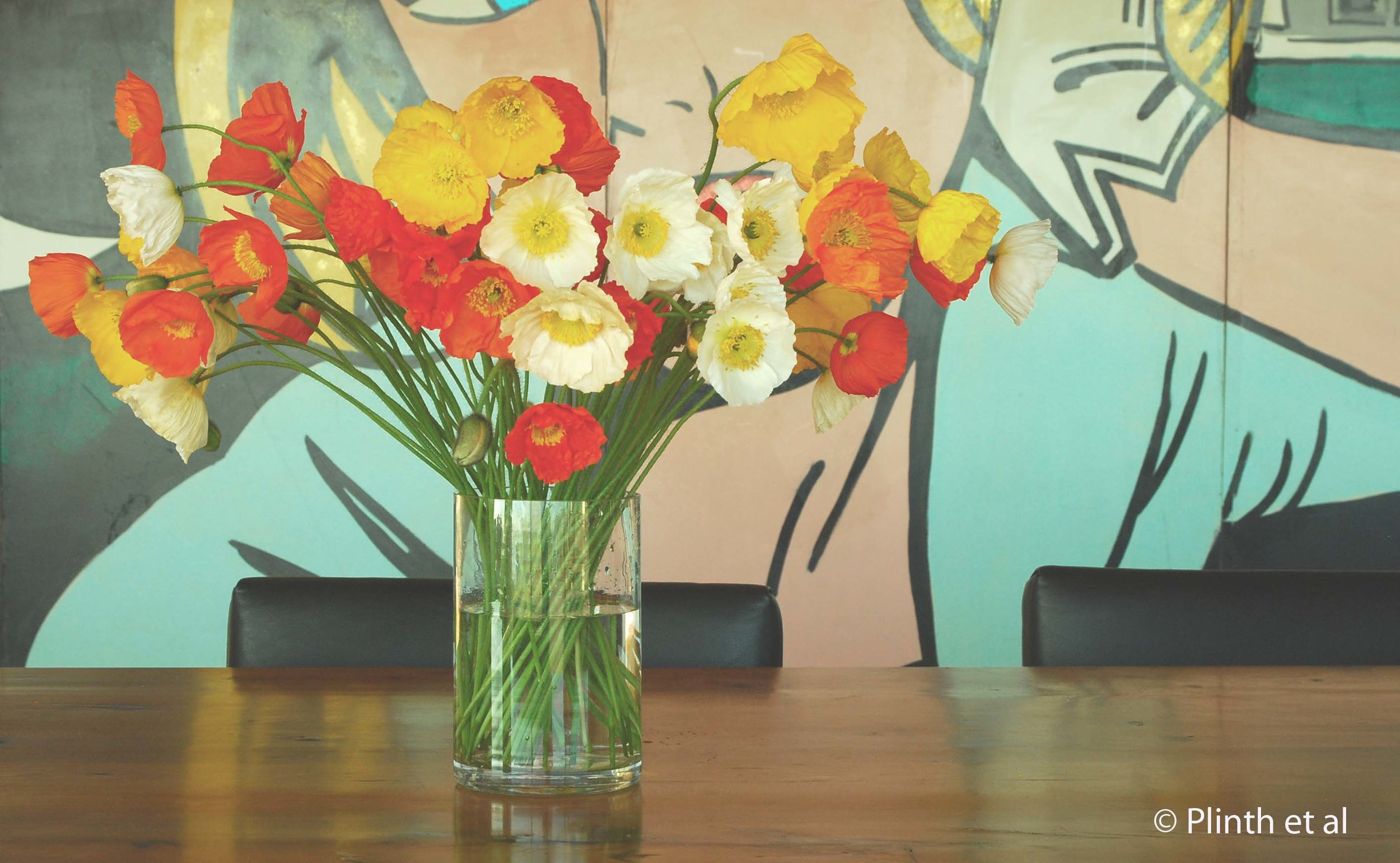 Cut Iceland poppies stand out against the pop art painting (private home, Tasmania, Australia)