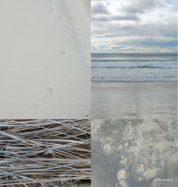 Textures_of_Hiba_Beach