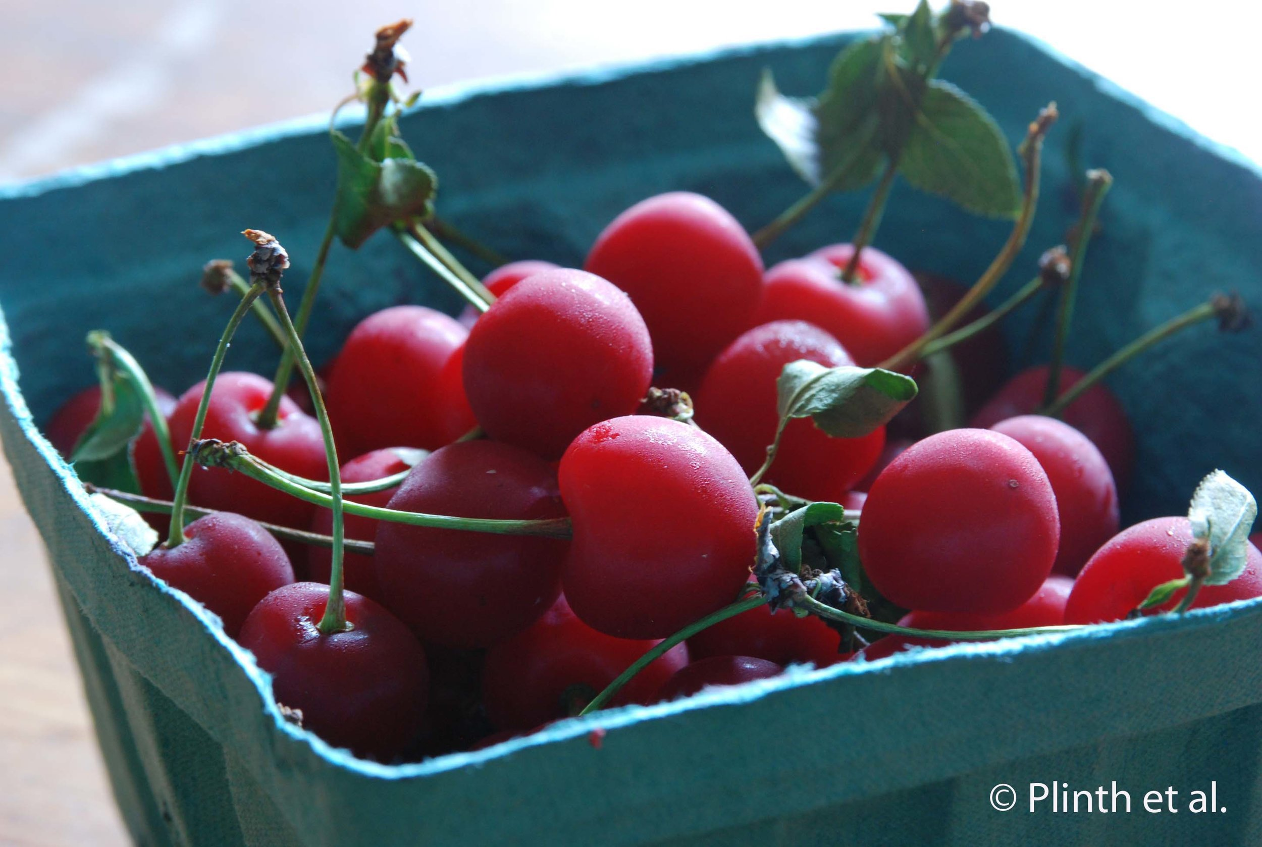 Sour_Cherries3Watermarked