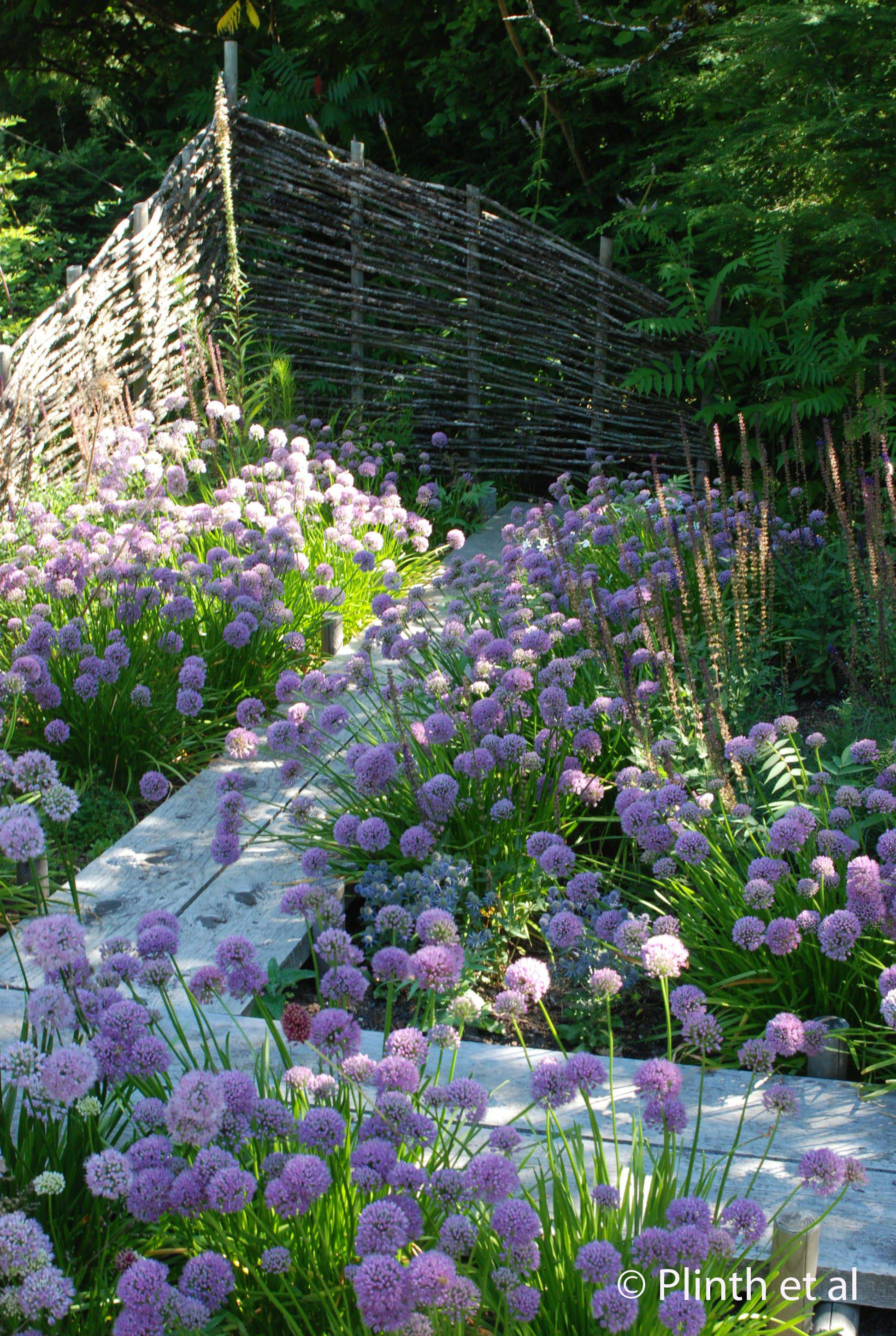 Alliums (Alllium senescens and A. 'Summer Beauty') , spill along the zig-zag bridge, a feature likely inspired by Chinese and Japanese gardens.