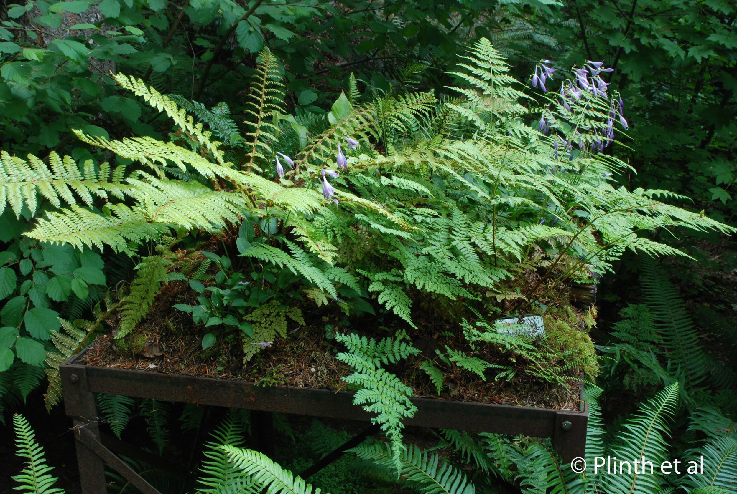 A metal table becomes a raised tableau of ferns, hostas, and mosses.
