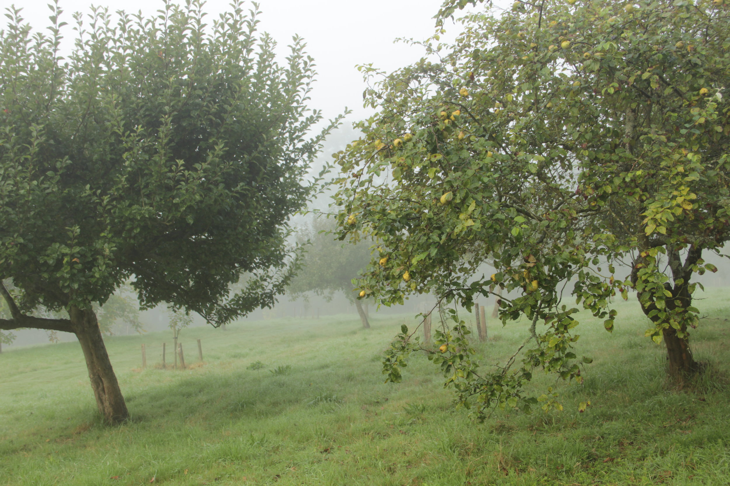 Gravetye Orchard