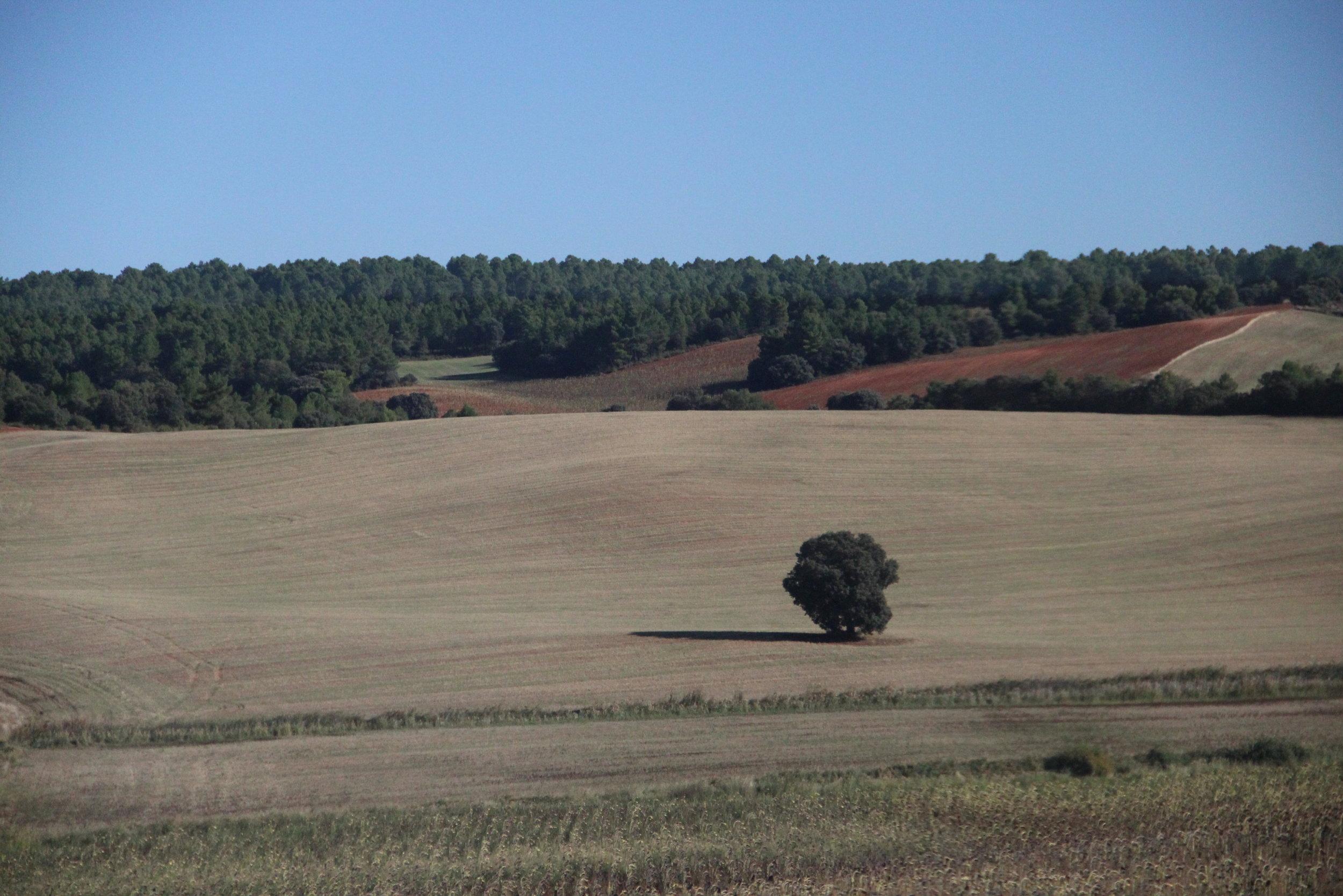 James McGrath Spanish Landscape