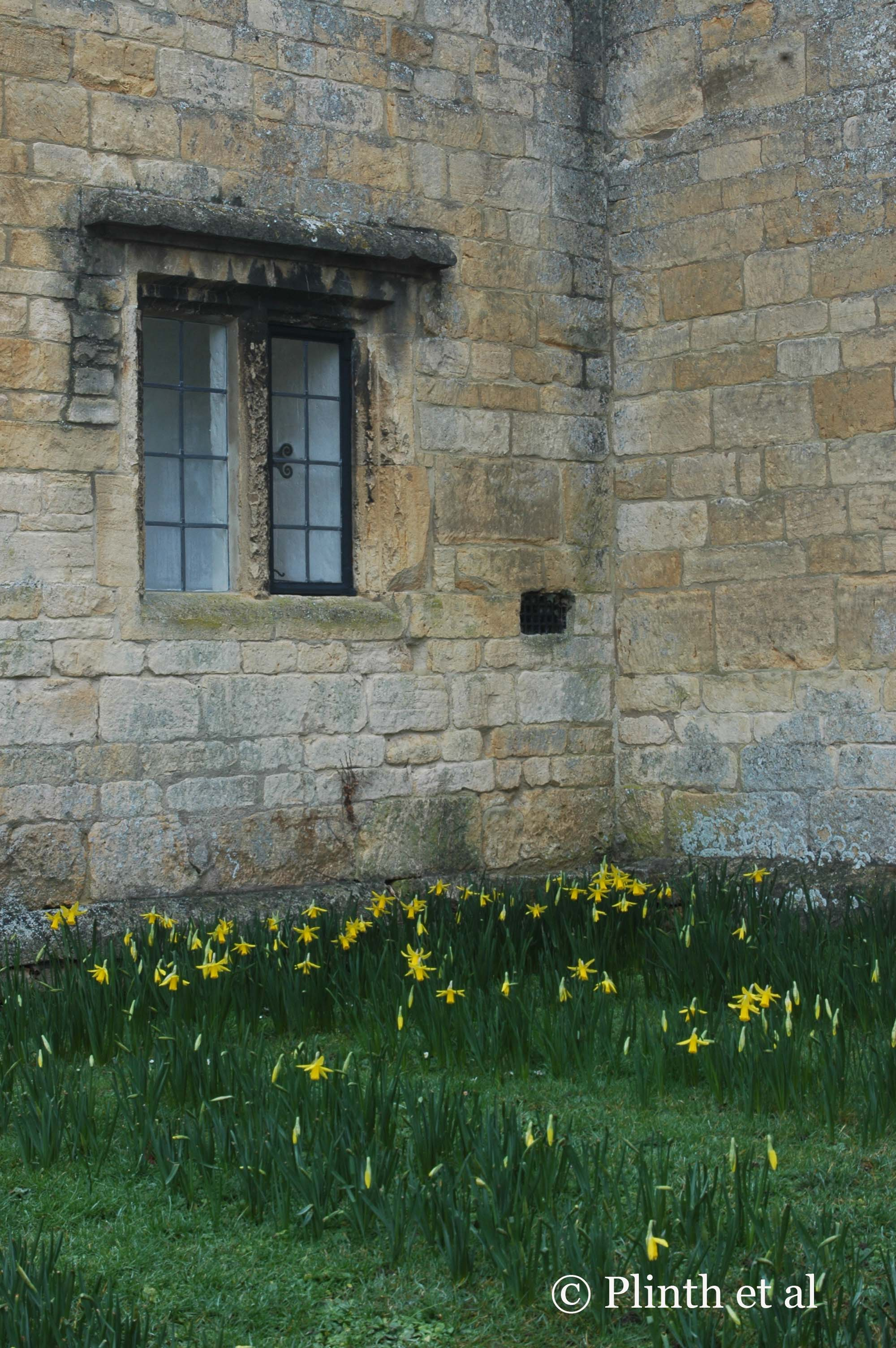 In this warmer corner of the house is the surprise sight of narcissi flowering. The neutral colors of the stone wall flatter the yellow flowers and green lawn.