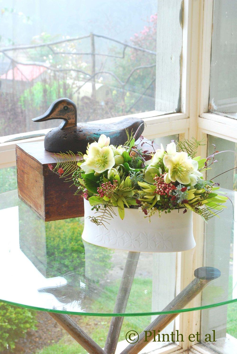 helleborus-viburnum-tinus-pittosporum-duck.jpg
