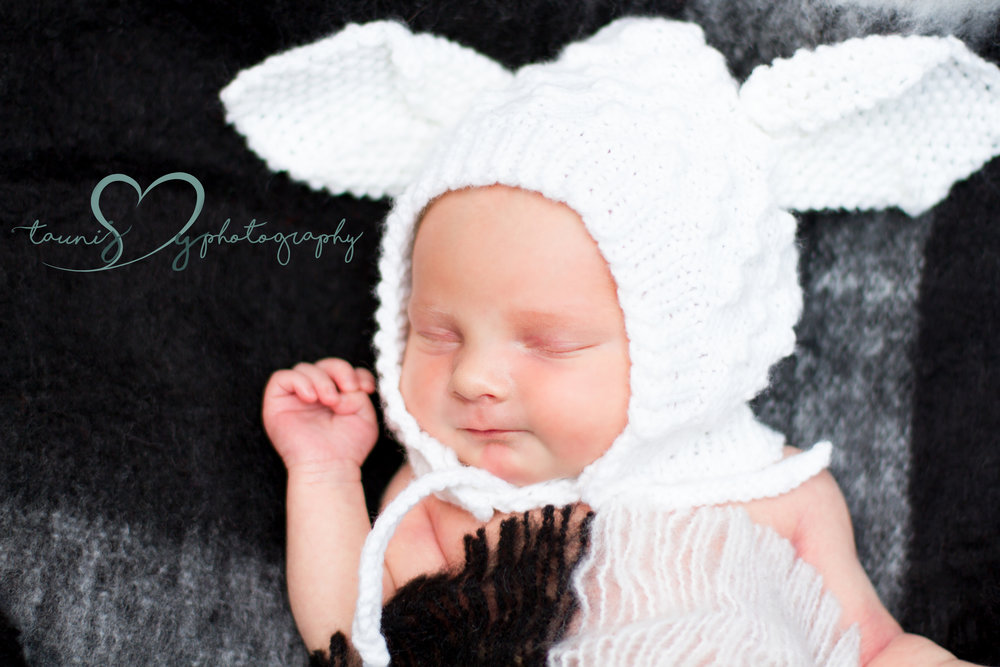 baby lamb !