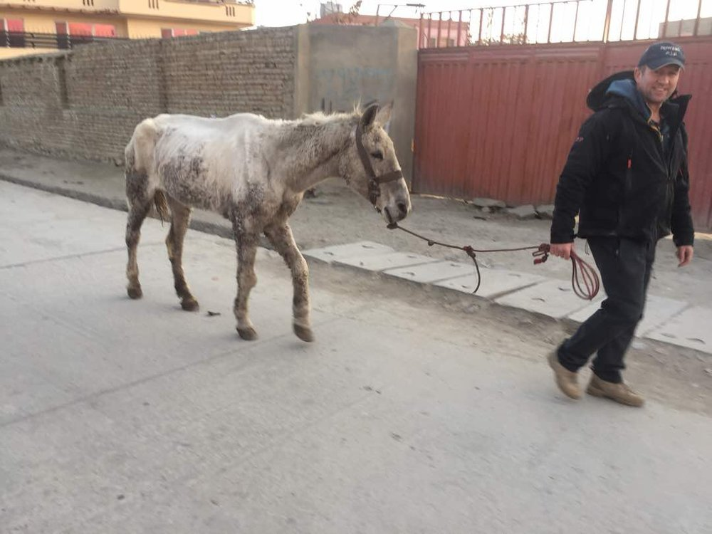 Dillian HORSE.jpg