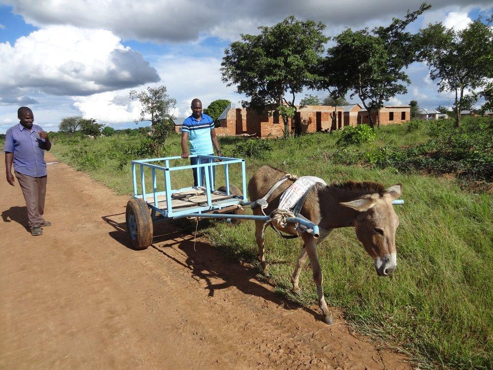 New humane correctly harnessed donkey cart.
