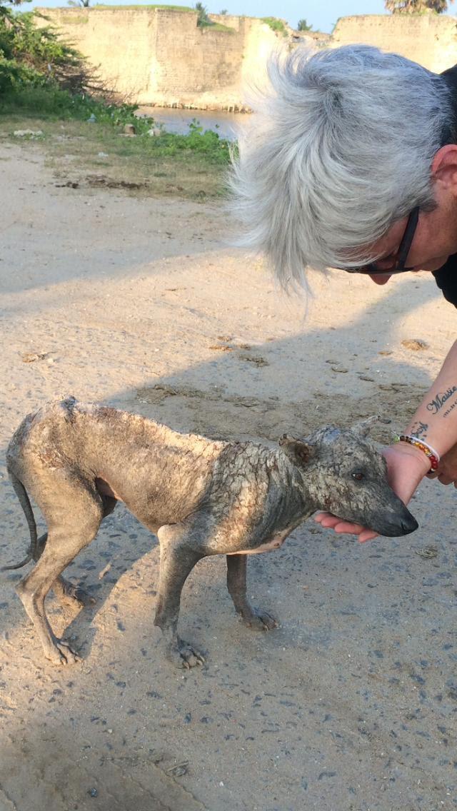 Dog at Fort Sri Lanka.jpg