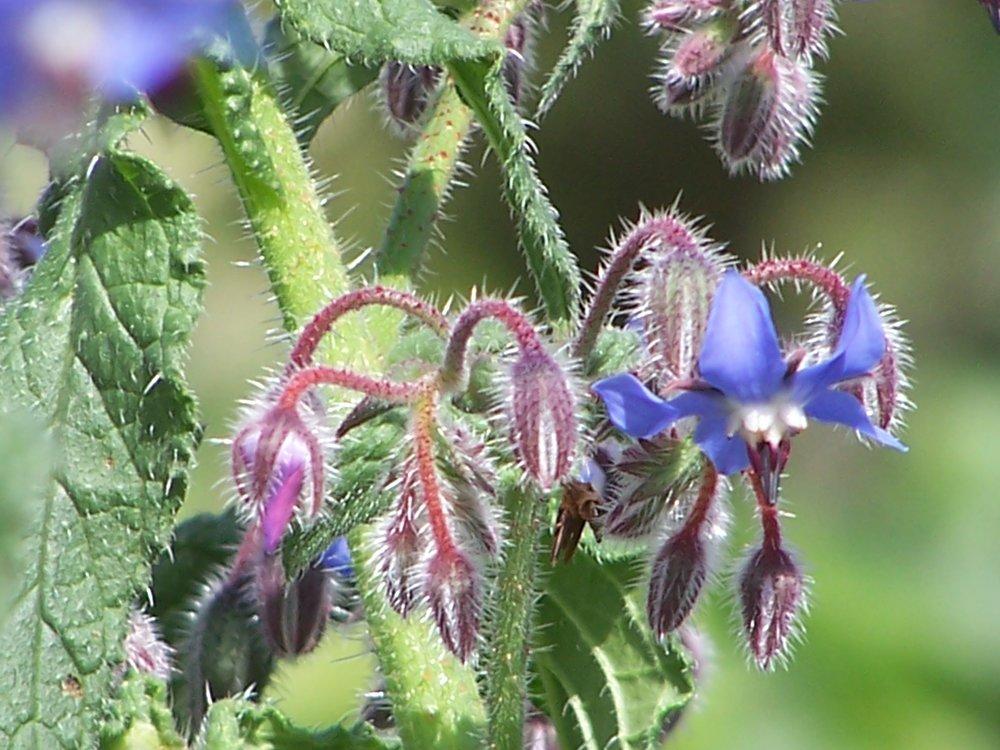 Country herbals 3.jpg