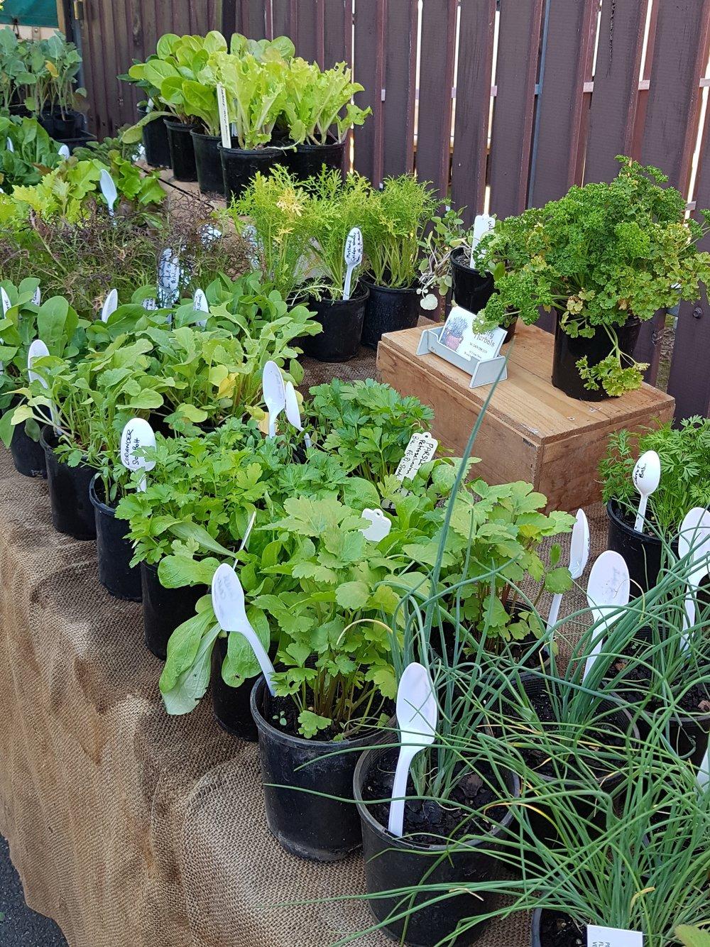 Country herbals.jpg
