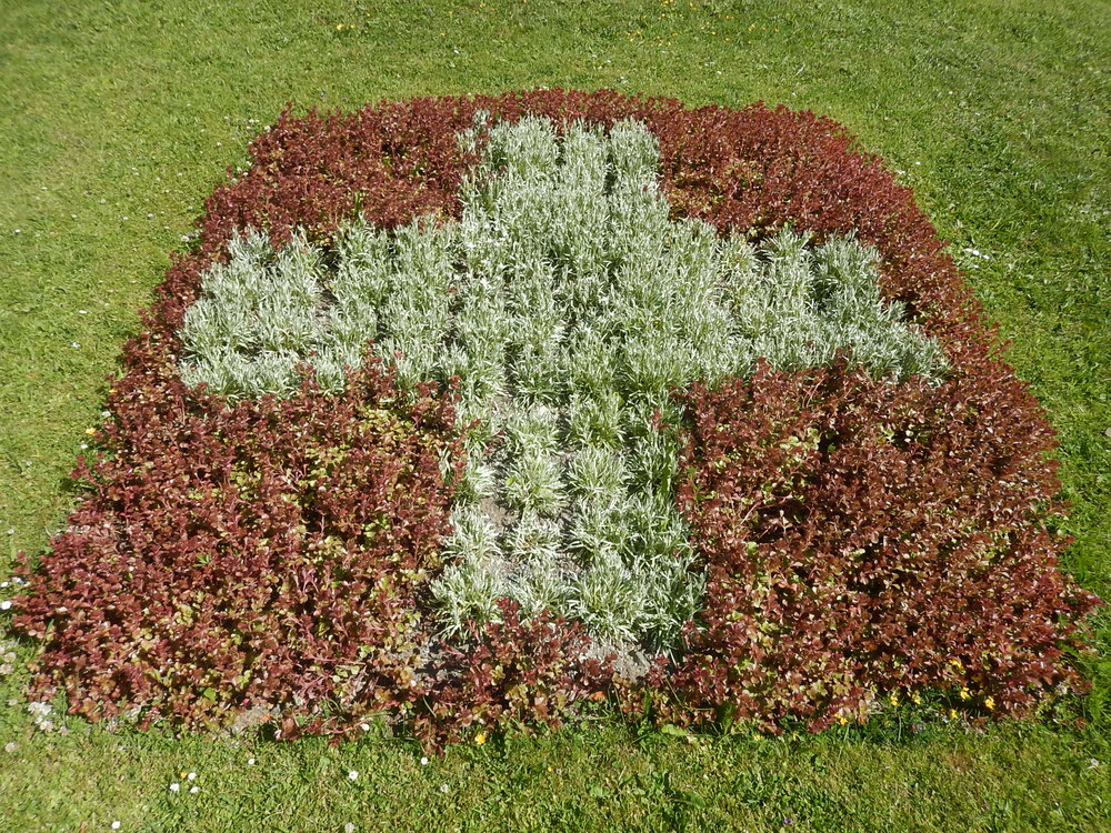 Swiss flag with edelweiss in centre. Not quite booming.