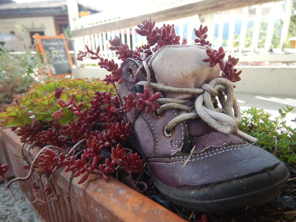 garden Shoes as opposed to gardening Shoes in Schatzalp garden, Switzerland