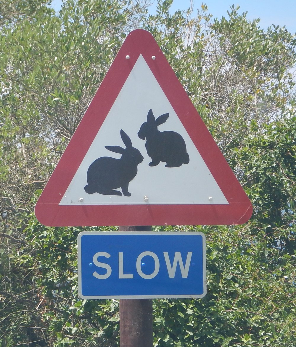 This caution ahead sign was in Gibraltar, in the National Park. Other signs showed butterflies, monkeys and blue wrens.