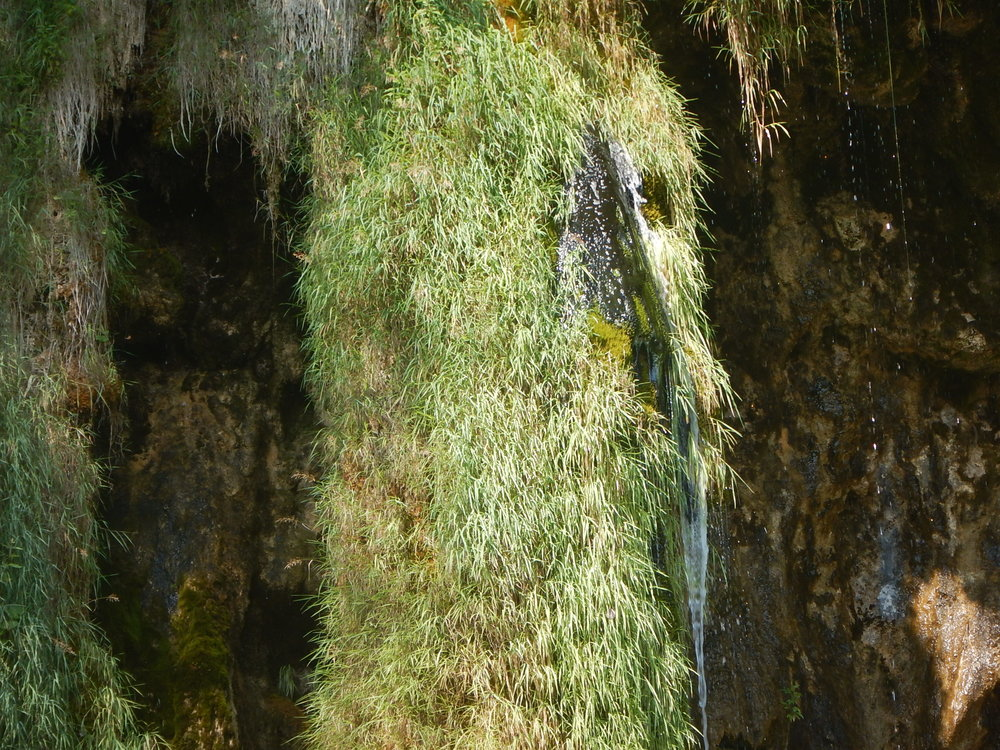 Look closely into this travertine barrier and you can see it is solid rock underneath the mossy vegetation.