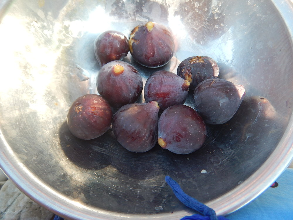 More beautiful figs from the family plot of land.  He was born and raised here. The locals regard him as the villages best fisherman.