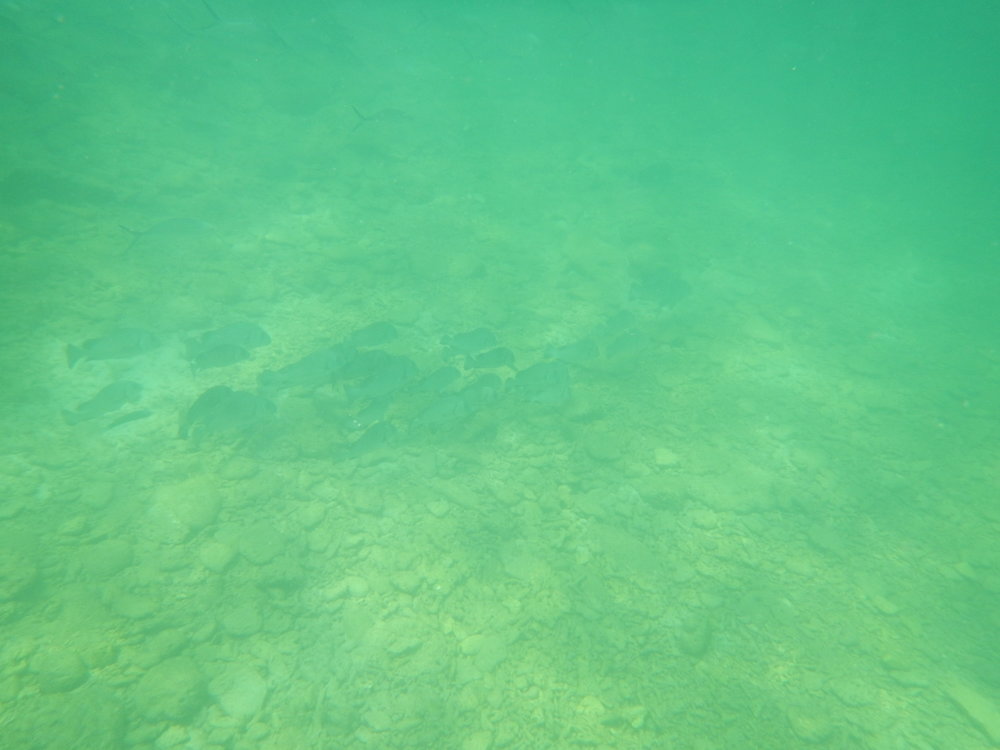 The sea floor.