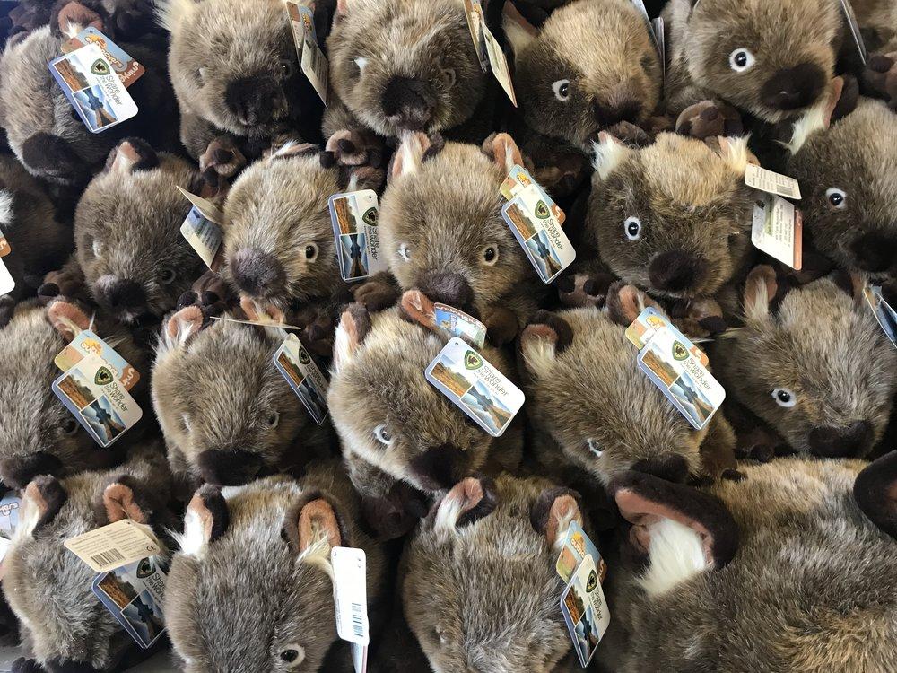 A Wisdom of wombats