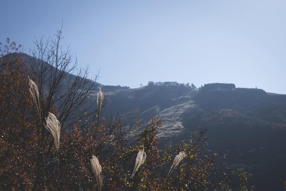 Hike to Kurozo Marshlands