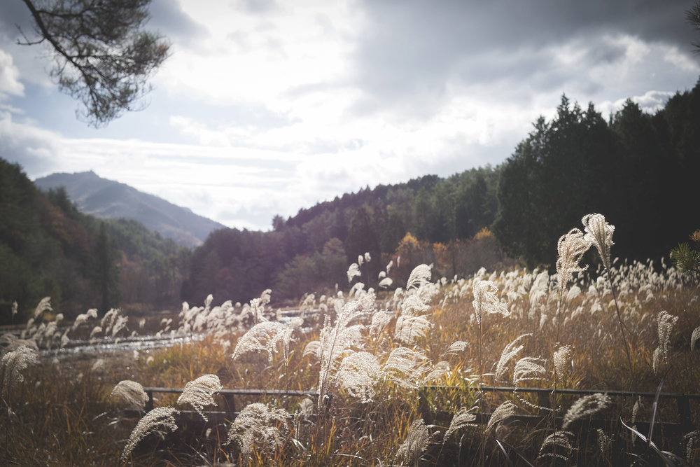 Kurozo Marshlands Hike