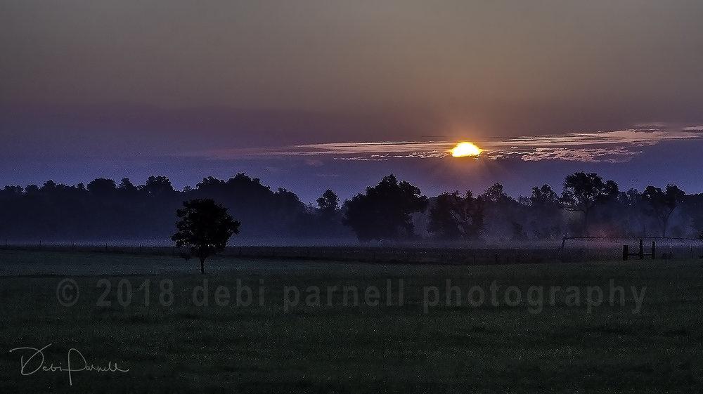 Foggy Sunrise LS-002