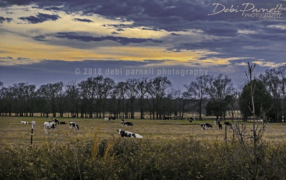 Twilight Meadows LS-007