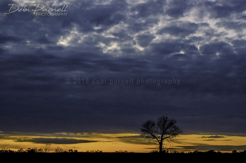 Twilight Tree LS-009