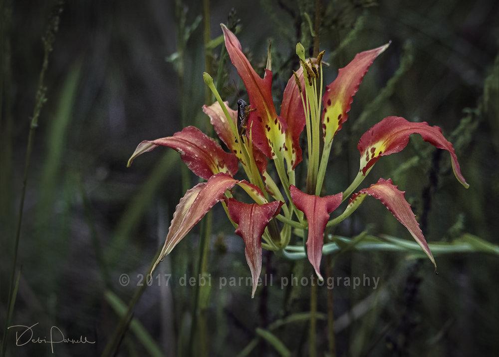 Pine Lily FL-005