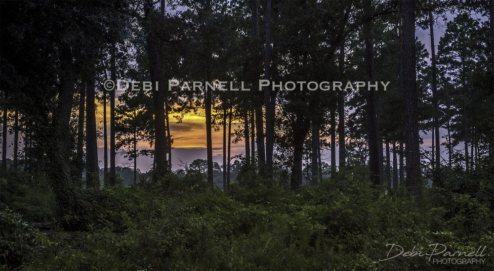 Piney Sunset LS-030