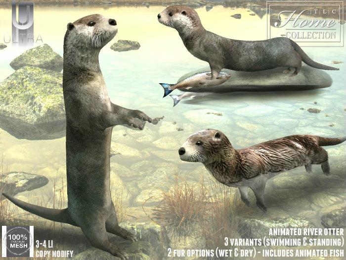 14012018 TLC river otter ULTRA.jpg
