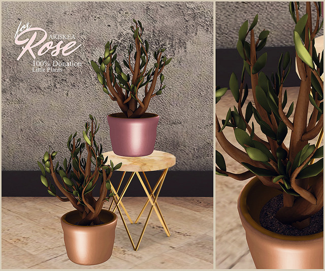 Ariskea - Little Plants - Rose.jpg