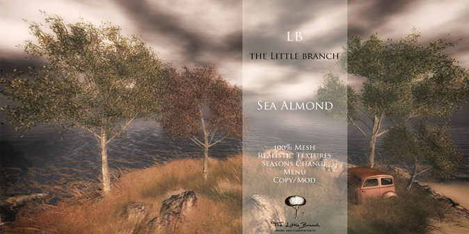 Little Branch - Sea Almond - Hello Tuesday.jpg