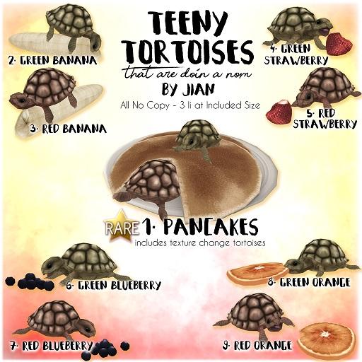 28022018 Jian Arcade Tortoises.jpg