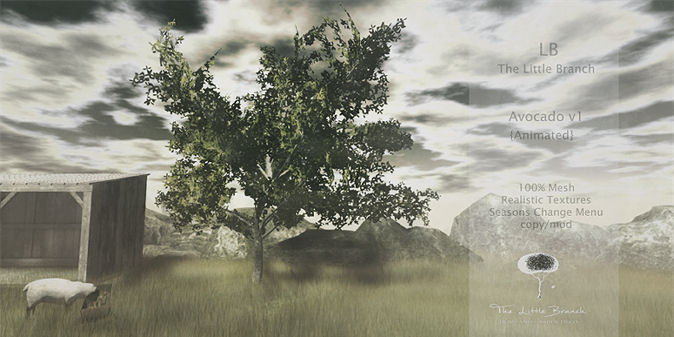 Little Branch - Avocado Tree - Hello Tuesday.jpg