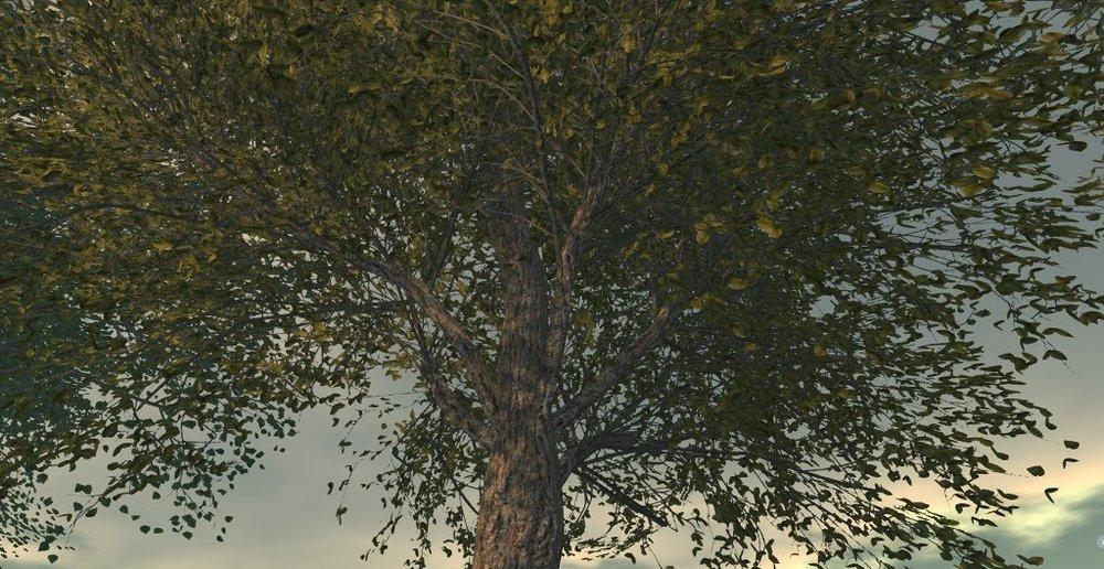 Little Branch - Emerald Elm - TLC.jpg