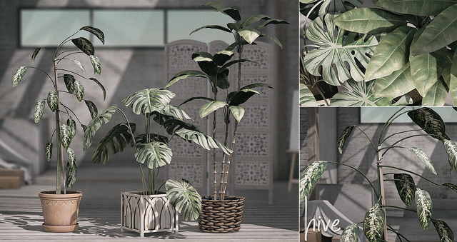 HIVE - Potted Plants Set - C88.jpg