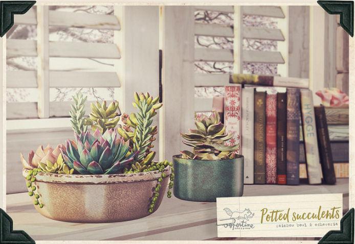 Vespertine - Potted Succulents - FLF.jpg