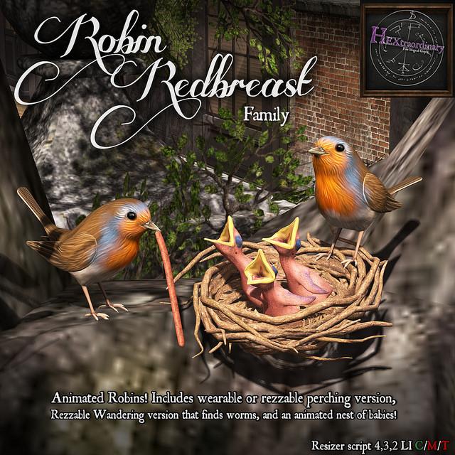 hextraordinary robin red breast family - bloom.jpg