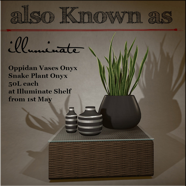Also Known As - Oppidan Vases & Snake Plant - Illuminate Shelf.jpg