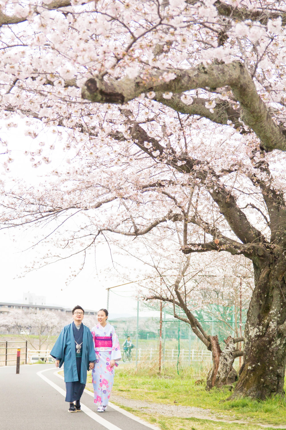 Photo tour with cherry blossoms in Kyoto 2017