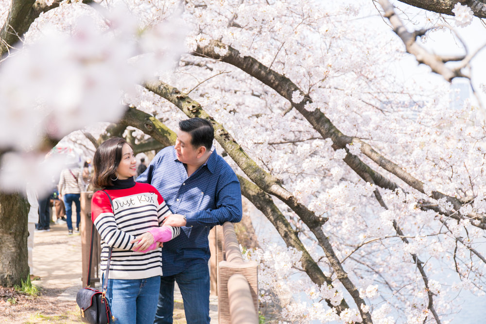 Photo tour with cherry blossoms in Osaka, Kyoto and Tokyo