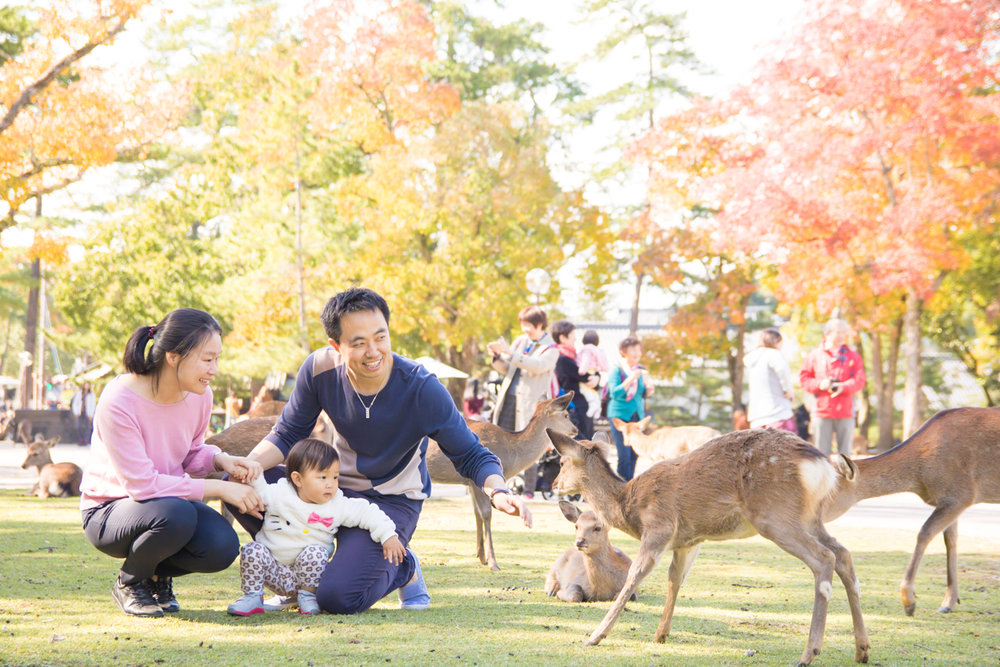 photoshoot and guide tour in NARA with photographer