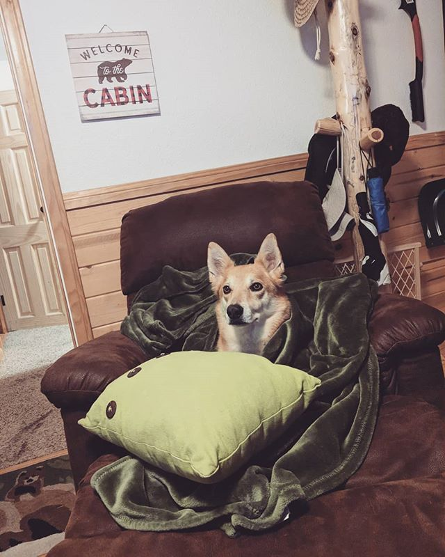Our pups @xenakyubi enjoying the sub freeIng temperatures in Big Bear this fall season at the cabin! . http://bearlyhomecabin.com . #dogfriendly #cabin #airbnb #vacation #dogs #bigbearlake #dog #relax