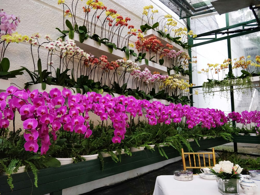 The Orchid Conservatory