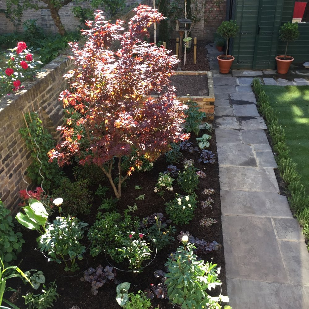 De Beauvoir  A unique city garden. Fusing concepts taken from classic Italian and Japanese gardens.formal, intricate yet spacious. Features in this garden include a greengage cordon, a Himalayan birch grove backed with Italian cypress, a rosemary hedge surrounding the lawn and a highly colourful red and white flower bed centred with a mature Japanese maple.