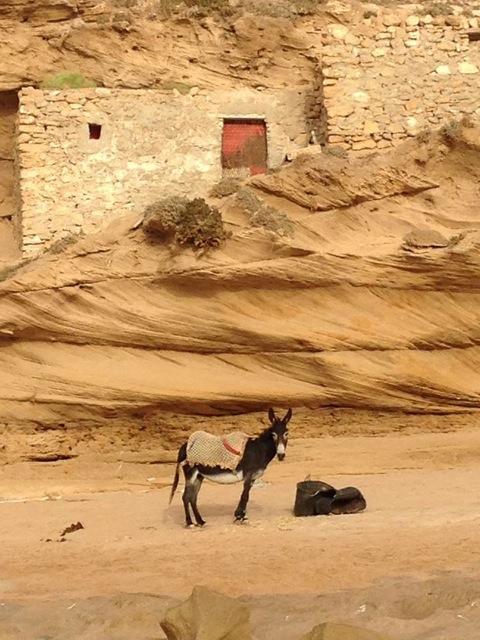 Mohammed land donkey..jpeg